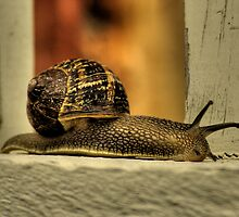 Snail 2, close up shot by eisblume