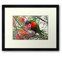 Rainbow Lorikeet ~ Breakfast Framed Print