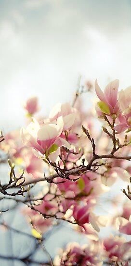 Evening Magnolia by Yuliya Art