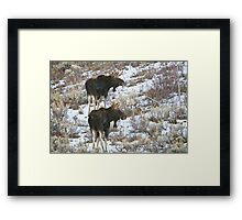 Double Bull Moose Framed Print