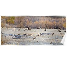 Autumn Elk Poster