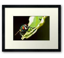 Portrait of a sleeping fly Framed Print