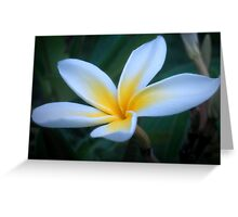 Pretty plumeria Greeting Card