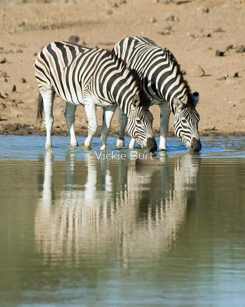 Zebras Drinking by Vickie Burt