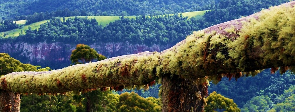 Moss fence by Jordan Miscamble