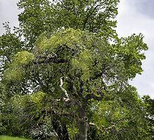 Gnarly Tree by Rebecca Bryson