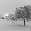 Snowed Olive Tree - Castelnau-le-Lez, France - 2010 by Nicolas Perriault