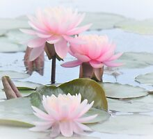 Water World of Lilies - Pond Lilies by Poete100