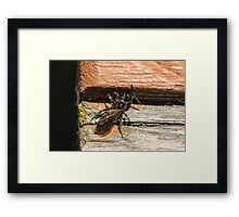 Insect and Table 2 Framed Print