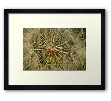 Seed Spindle Framed Print