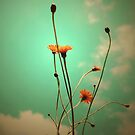 Vintage Weeds by Basia McAuley
