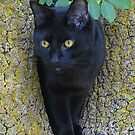 Black Cat In A Tree by Jenny Brice