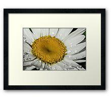 White Flower Closeup Framed Print