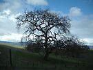 Old Oak by waddleudo