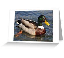 Water of a ducks bill Greeting Card