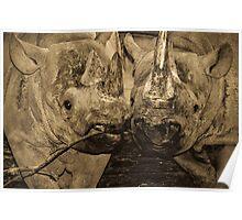 Rhinos in Love Poster