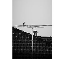 Watching life go by Photographic Print