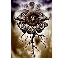 God seed Photographic Print