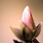 Hello Spring by Linda Yates