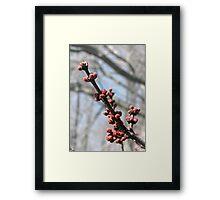 Spring's Awakening Framed Print