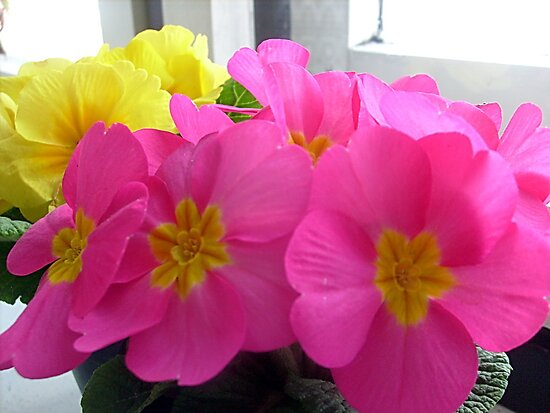 Colors of spring by Ana Belaj