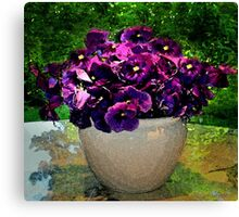 violet pansy Canvas Print