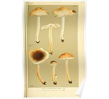 Illustrations of British Fungi by Mordecai Cubitt Cook 1891 V3 0649 AGARICUS  HEBELOMA  MESOPHAEUS Poster