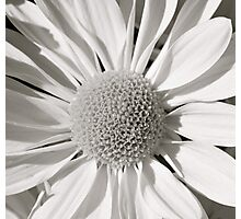 flower bw Photographic Print