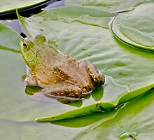 Bullfrog on a lily pad... by RichImage