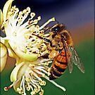A Bee in Mexico by Angel Warda
