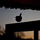 Bird 1 by Alice Oates