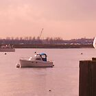 Resting Seagull - Burnham-On-Crouch by MichelleRees