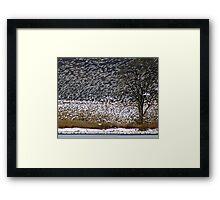 Snow Geese #2 Framed Print