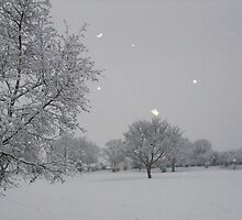 Overnight Snow by MichelleRees