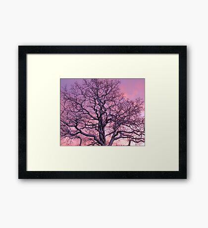Snowy Sunset Oak Tree, Chelmsford Framed Print