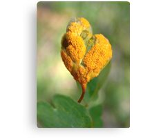 Orange Details Among the Green Canvas Print