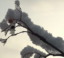 Branch & Berries Covered in Snow by MichelleRees
