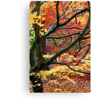 Bright colours of Autumn Canvas Print