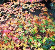 Autumn Kaleidoscope by nymphalid