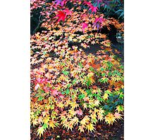 Autumn Kaleidoscope Photographic Print