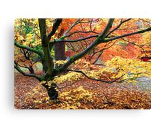Japanese Acer Woodland in Autumn Canvas Print