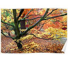 Japanese Acer Woodland in Autumn Poster