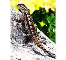 Patient Lizard Photographic Print