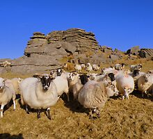 Dartmoor: Stop Following Me! by Rob Parsons