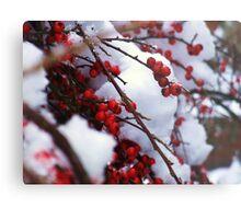 Red Berries Covered in Snow Metal Print