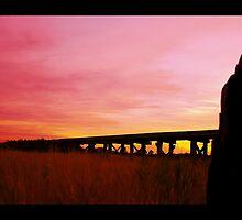 Pink Lady by Jonathan Newton