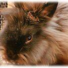 Iddy Biddy Bunny by vigor