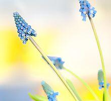 Spring Sweet Spring by Marilyn Cornwell