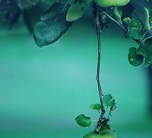 Little Green Apples by Laurie Minor