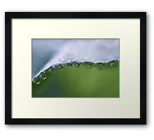 Morningbliss Framed Print